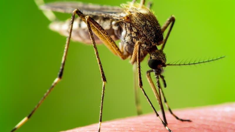 природа Запитання-цікавинка: Комарі якої статі кусають людей?