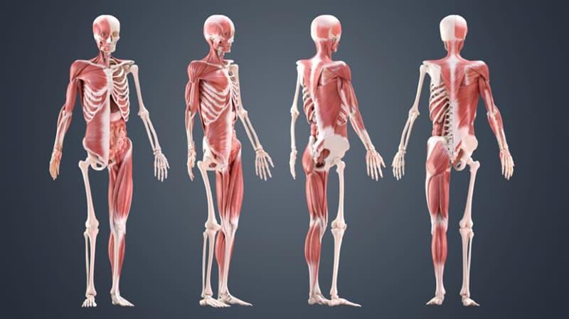 Наука Вопрос: Какая структура есть в теле человека?