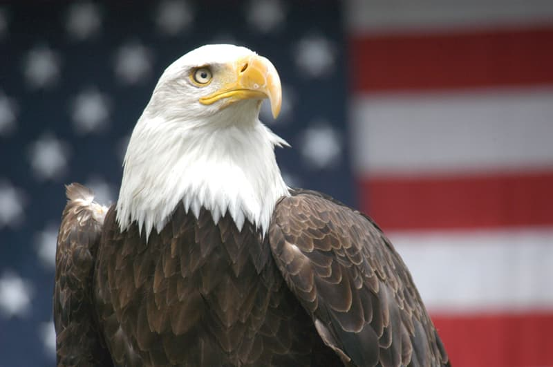 History Trivia Question: Which former U.S. president was born on the 15th of March, 1767?