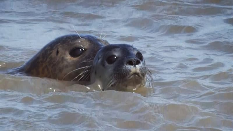 Nature Trivia Question: What is the world's only indigenous species of freshwater seals?