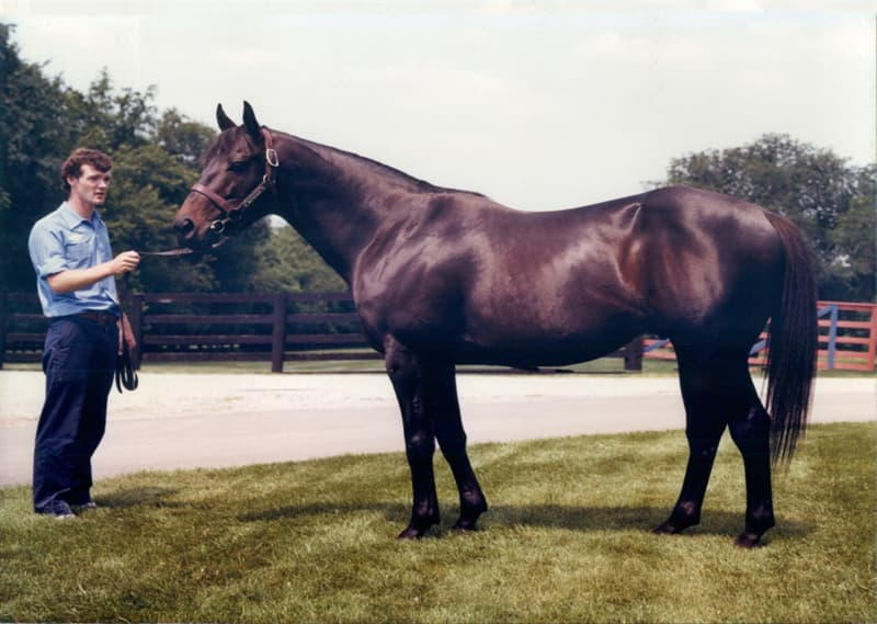 History Trivia Question: Which horse won the 1977 Triple Crown?