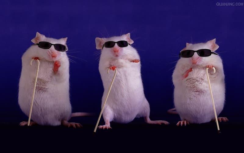 Kultur Wissensfrage: Welcher Charakter aus einem Kinderlied schnitt die Schwänze drei blinder Mäuse ab?