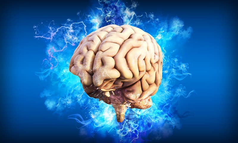 """Science Trivia Question: Which structure of the mind acts according to the """"reality principle""""?"""