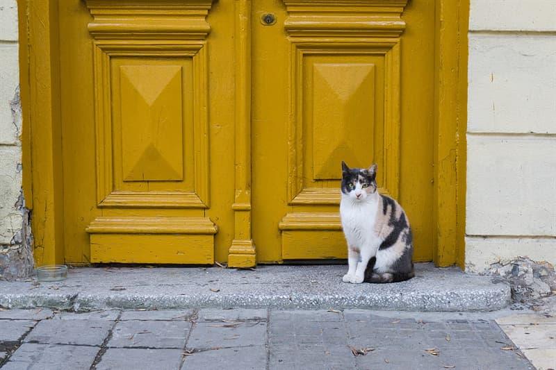 Geschichte Wissensfrage: Wer erfand die Katzenklappe?