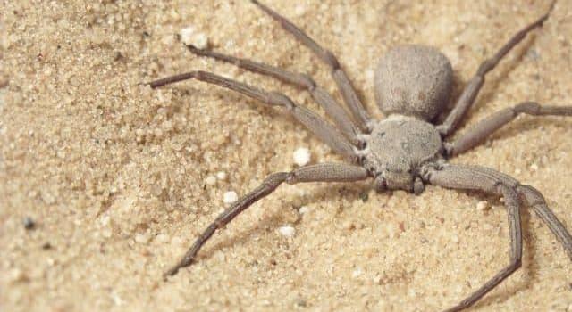Natur Wissensfrage: Wie lange kann die Webspinne ohne Essen oder Trinken überleben?