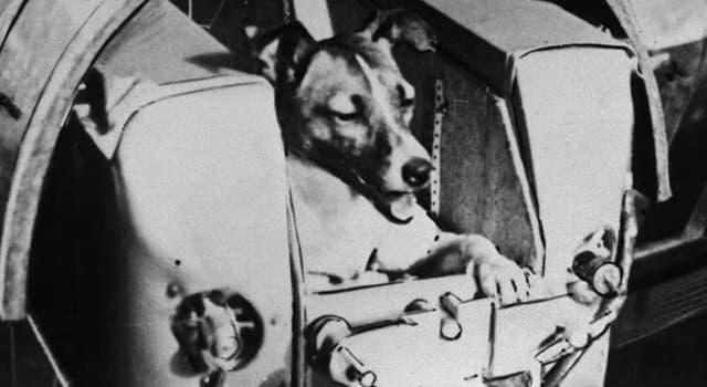 Наука Вопрос: Как звали первых собак, погибших в ходе осуществления советской программы полётов собак в космос (как на геофизических, так и на космических ракетах)?