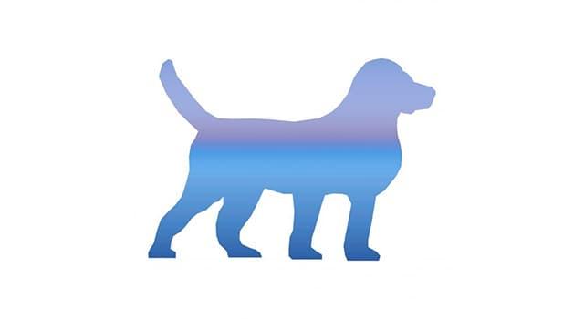 Natur Wissensfrage: Welche ist die höchste Hunderasse der Welt?