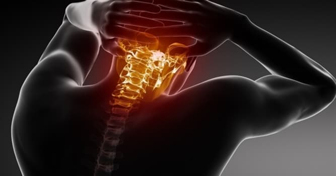 Science Trivia Question: How many vertebrae make up the human spine?