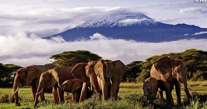 География Вопрос: Как называется самая высокая точка Африки?