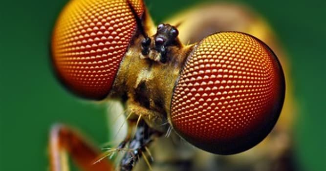Nature Trivia Question: What insect kills after mating?