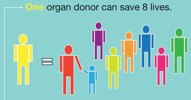 Science Trivia Question: What is the most commonly transplanted human organ in the world?