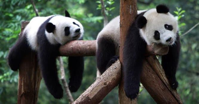 География Вопрос: Где был открыт первый в России зоологический сад ?