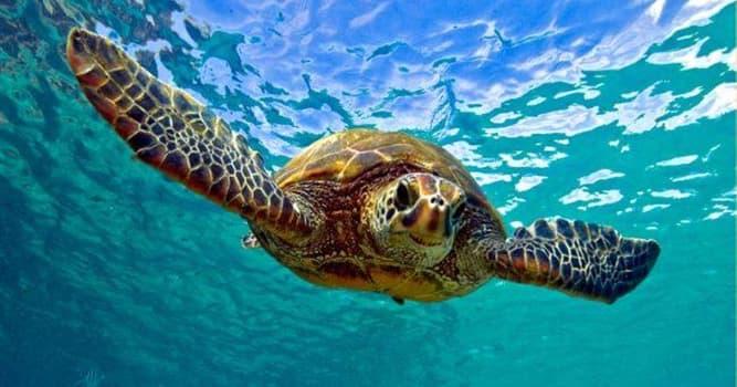 Наука Вопрос: Из какого количества костей состоит панцирь черепахи?