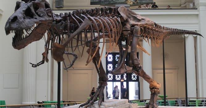 Наука Вопрос: Какое прозвище дали самому большому из полных скелетов тираннозавра?