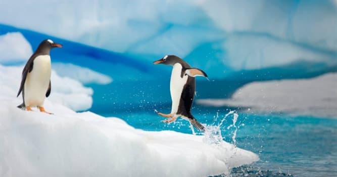 География Вопрос: Кому принадлежит Антарктида?