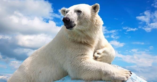 Nature Trivia Question: Where do polar bears live?