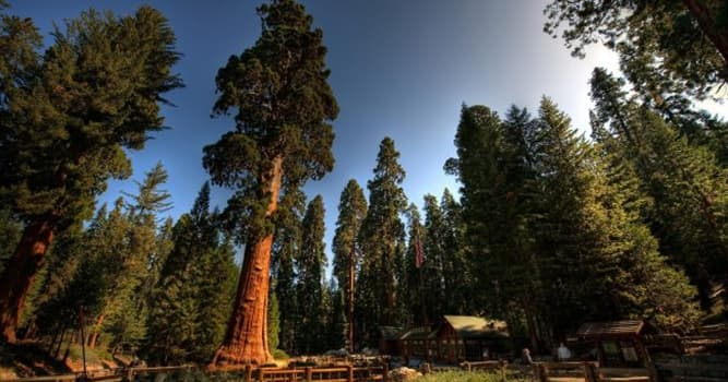 Geography Trivia Question: Where is the Redwood Forest situated?