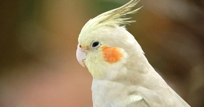 Nature Trivia Question: Which bird is in the picture?