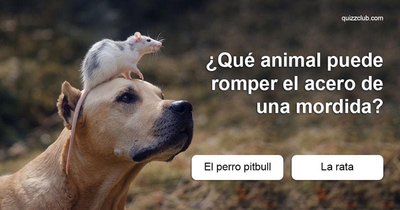 Geografía Quiz Test: Sólo 2de cada 10personas pueden pasar este test sobre los animales