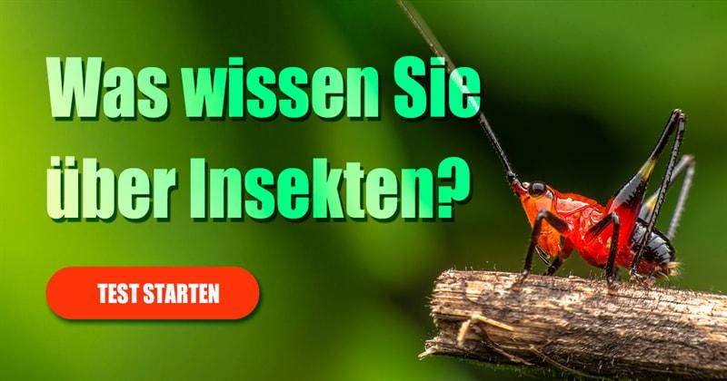 Natur Quiz-Test: Insekten-Quiz