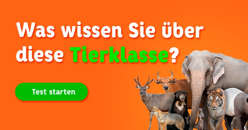Natur Quiz-Test: Säugetier-Quiz