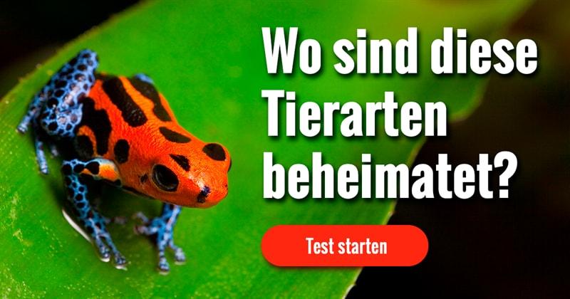 Natur Quiz-Test: Welches Tier ist in welchem Land zuhause?