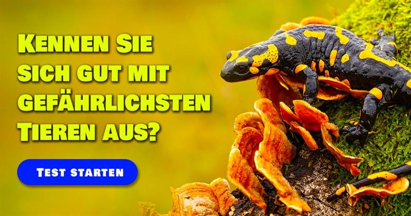 Natur Quiz-Test: Giftigste Tiere Deutschlands