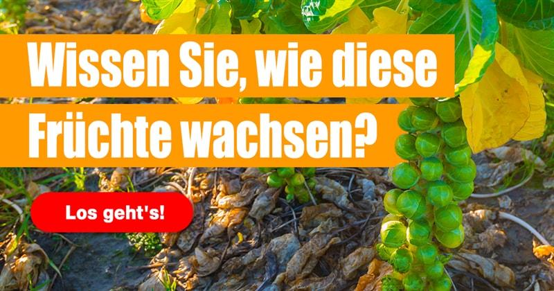 Natur Quiz-Test: Erkennen Sie dieses Obst und Gemüse in seiner natürlichen Umgebung?