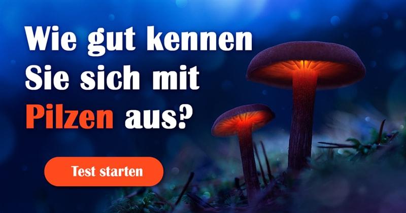 Natur Quiz-Test: Pilze-Quiz