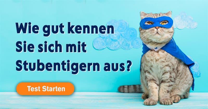 Tiere Quiz-Test: Katzen-Quiz