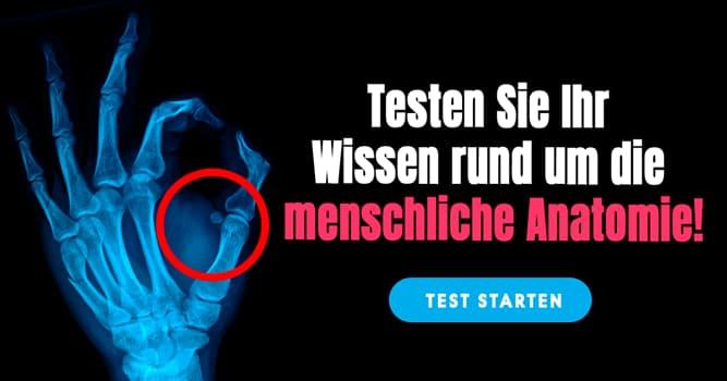 Gesundheit Quiz-Test: Anatomie-Quiz: Unsere Hand