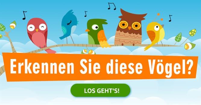 Natur Quiz-Test: Quiz: Vögel