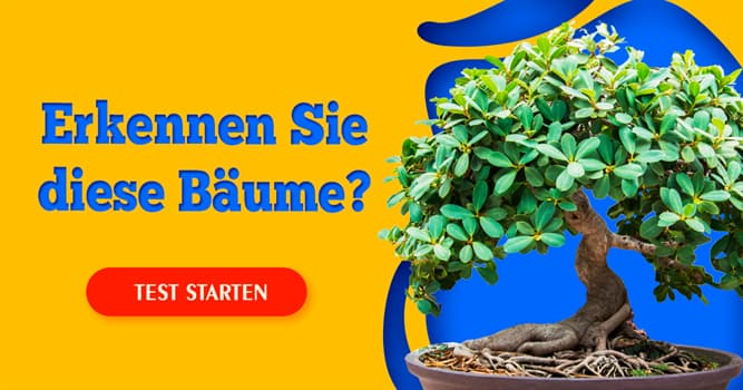 Natur Quiz-Test: Quiz: Bäume und Sträucher