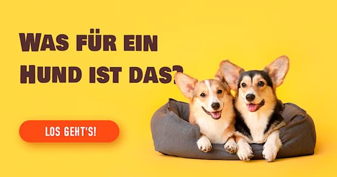 Tiere Quiz-Test: Das Hunde-Quiz