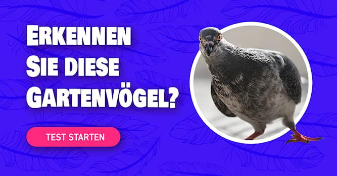 Natur Quiz-Test: Kennen Sie diese Vögel aus Ihrem Garten?