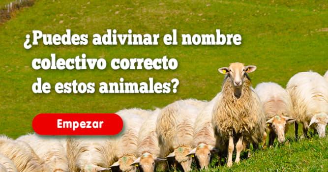 Quiz Test: ¿Puedes adivinar el nombre colectivo correcto de estos animales?