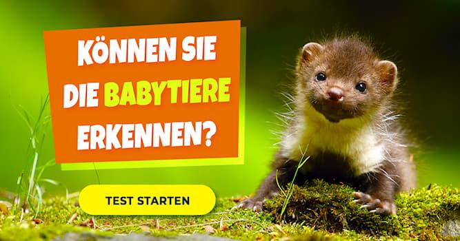Natur Quiz-Test: Welche Babytiere sind das?