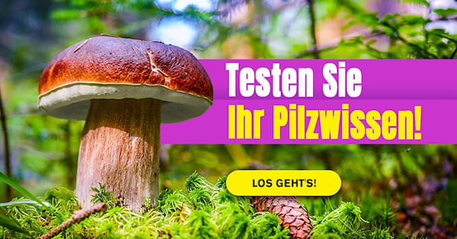 Natur Quiz-Test: Welche Pilzart ist das?