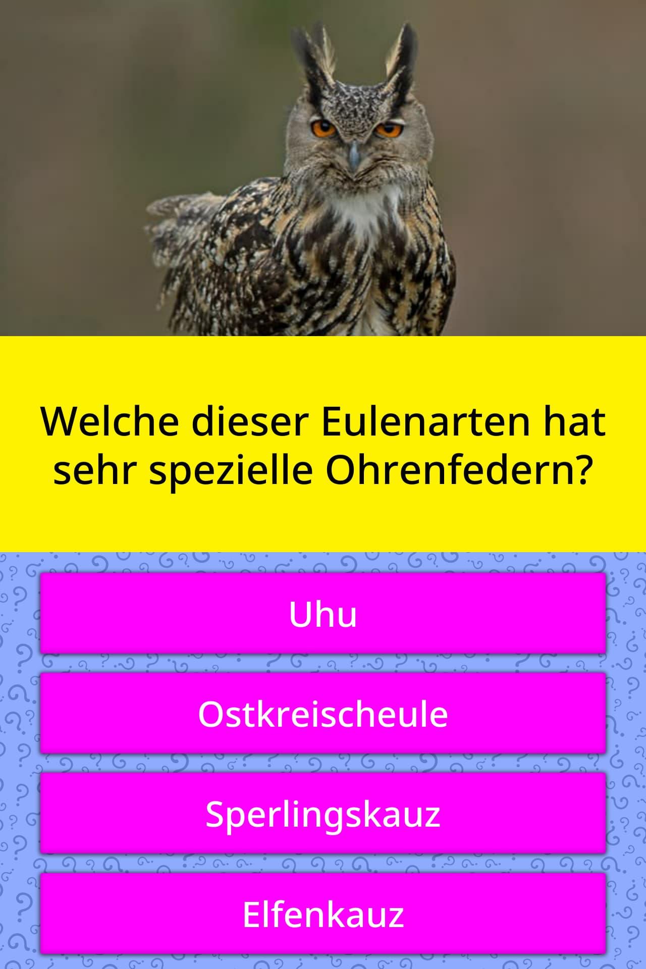 Welche dieser Eulenarten hat sehr | Quizfragen | QuizzClub