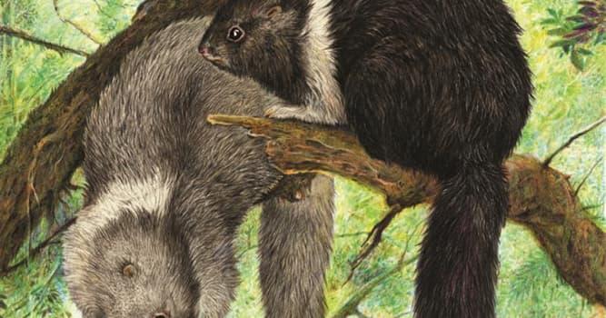 Naturaleza Pregunta Trivia: ¿Dónde se encuentra la mayor concentración de especies únicas de mamíferos?