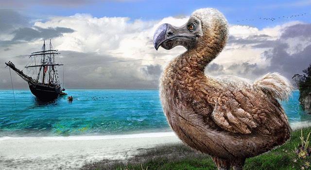 Naturaleza Pregunta Trivia: ¿De dónde era originario el pájaro Dodo?