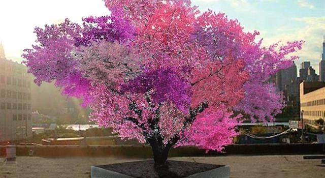 Naturaleza Pregunta Trivia: ¿Existe un árbol que da 40 frutas de distintas especies?