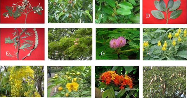 Сiencia Pregunta Trivia: ¿Cuál es la ciencia que estudia a las plantas?