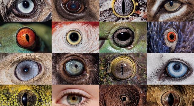 """Naturaleza Pregunta Trivia: ¿Cuáles de los siguientes animales tienen un """"tercer párpado"""" o membrana nictitante completa?"""