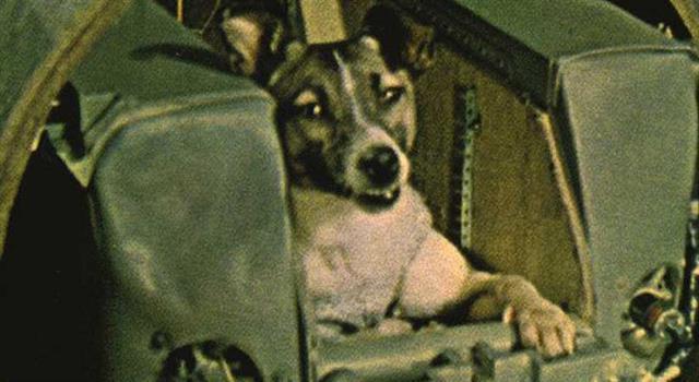Сiencia Pregunta Trivia: ¿Cuánto tiempo sobrevivió la perra Laika en el espacio, después que fue enviada en la nave Soviética Sputnik 2?