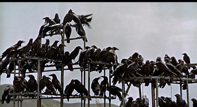 """Cultura Pregunta Trivia: ¿Quién es el autor del libro """"Los Pájaros""""?"""