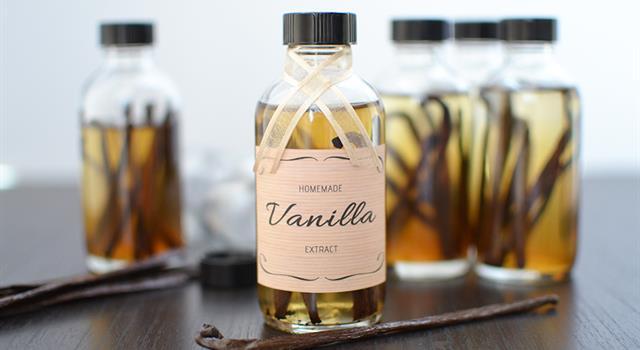 Natur Wissensfrage: Aus welcher Pflanze wird Vanille gewonnen?