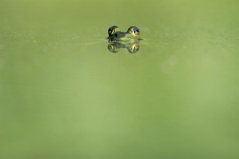 природа Запитання-цікавинка: Як називається новонароджений жабеня?
