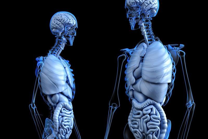 Наука Запитання-цікавинка: Як називається лікар, який спеціалізується на проблемах опорно-рухового апарату?