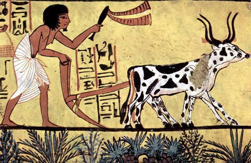 Kultura Pytanie-Ciekawostka: Jakie było święte zwierzę starożytnego Egiptu?